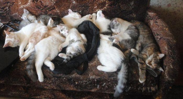 20 fatos peculiaridades dos gatos que você não sabia 20