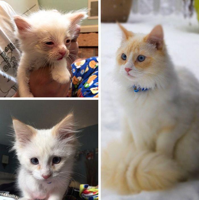 20 transformações de animais que foram adotado 6