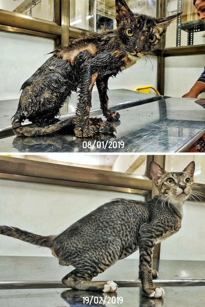 20 transformações de animais que foram adotado 8