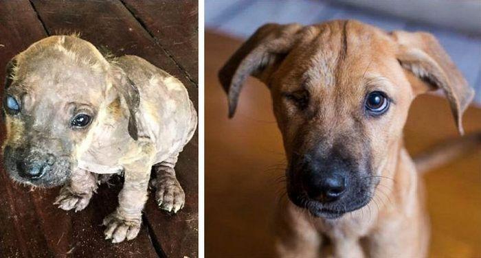 20 transformações de animais que foram adotado 20