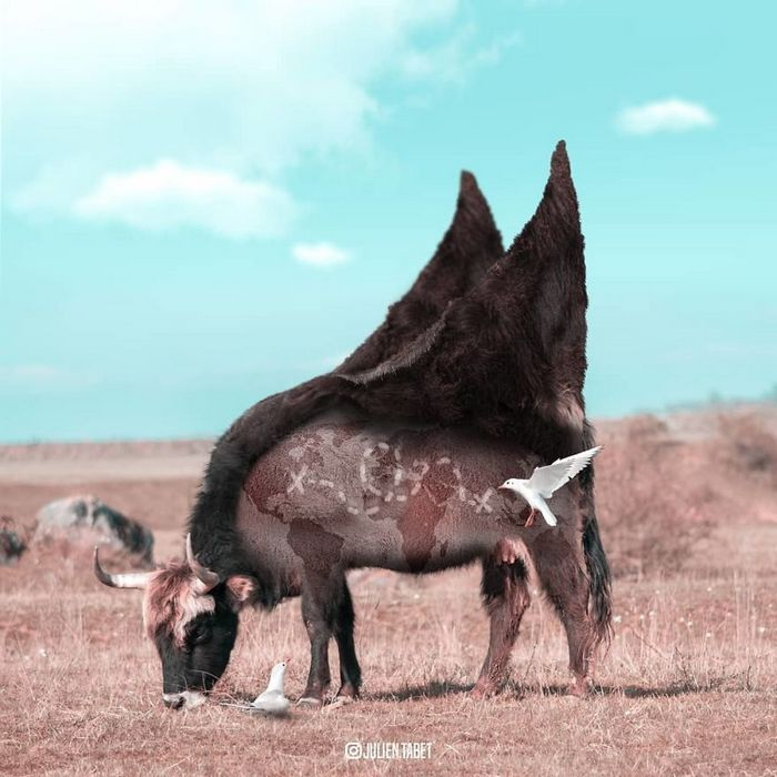 Aqui está como eu imagino que os animais se comportam quando você não está olhando (25 fotos) 3