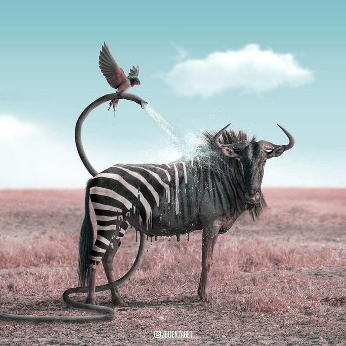 Aqui está como eu imagino que os animais se comportam quando você não está olhando (25 fotos) 9
