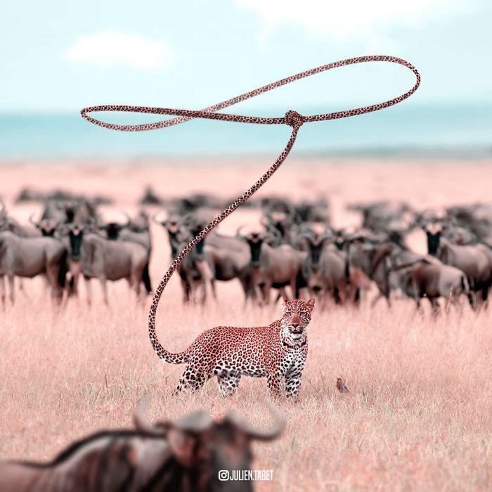 Aqui está como eu imagino que os animais se comportam quando você não está olhando (25 fotos) 11