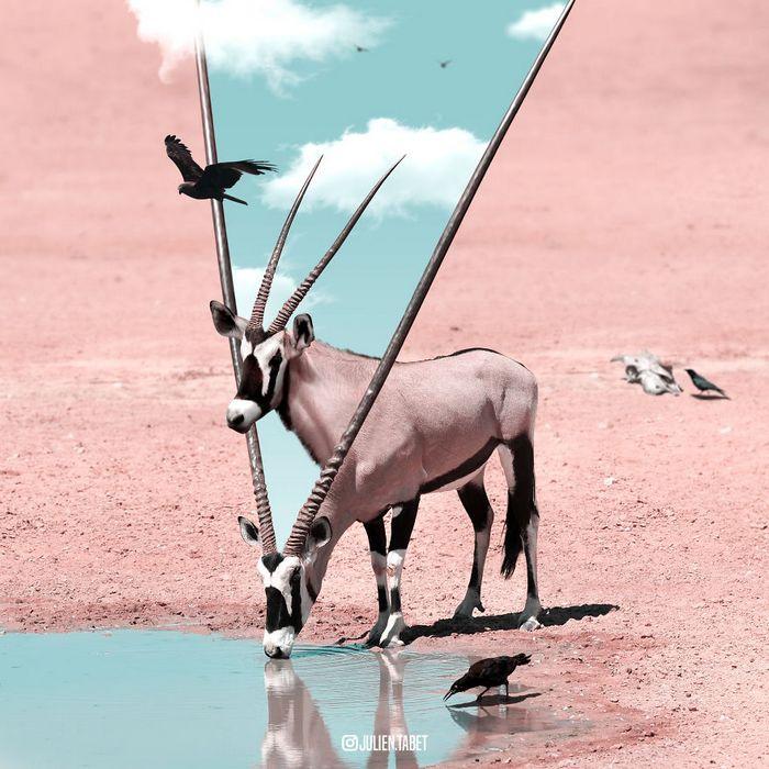 Aqui está como eu imagino que os animais se comportam quando você não está olhando (25 fotos) 27