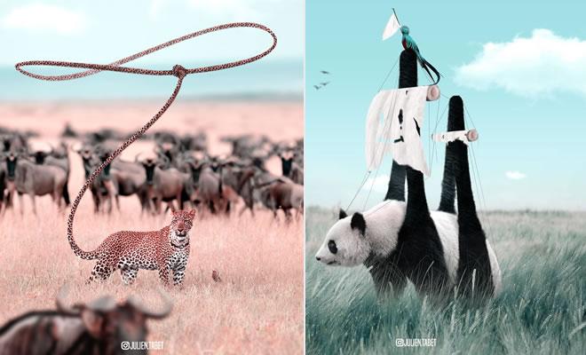 Aqui está como eu imagino que os animais se comportam quando você não está olhando (25 fotos) 1