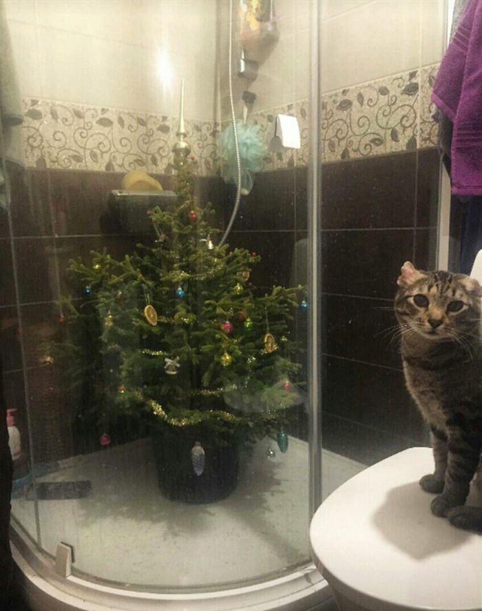 21 dicas genias de como proteger sua árvore de Natal dos animais de estimação 2