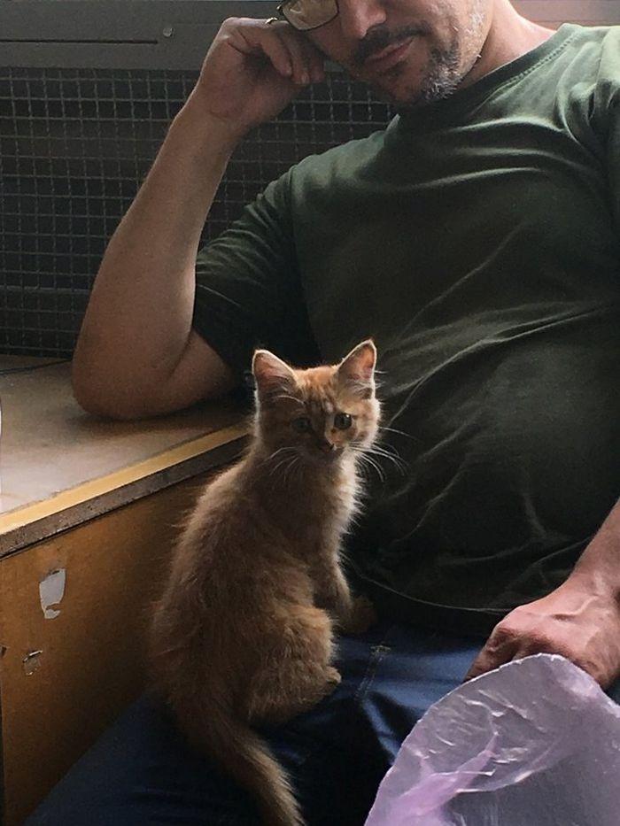 16 histórias de pessoas que adoram um gato 11