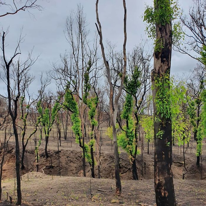 A vida está retornando à terra destruída pelos incêndios na Austrália (35 fotos) 6