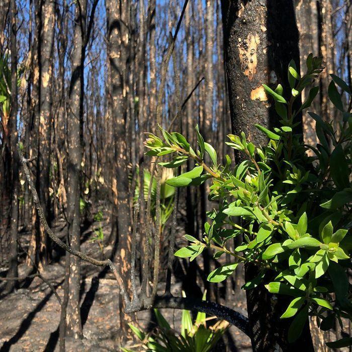 A vida está retornando à terra destruída pelos incêndios na Austrália (35 fotos) 8