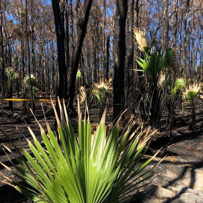A vida está retornando à terra destruída pelos incêndios na Austrália (35 fotos) 9
