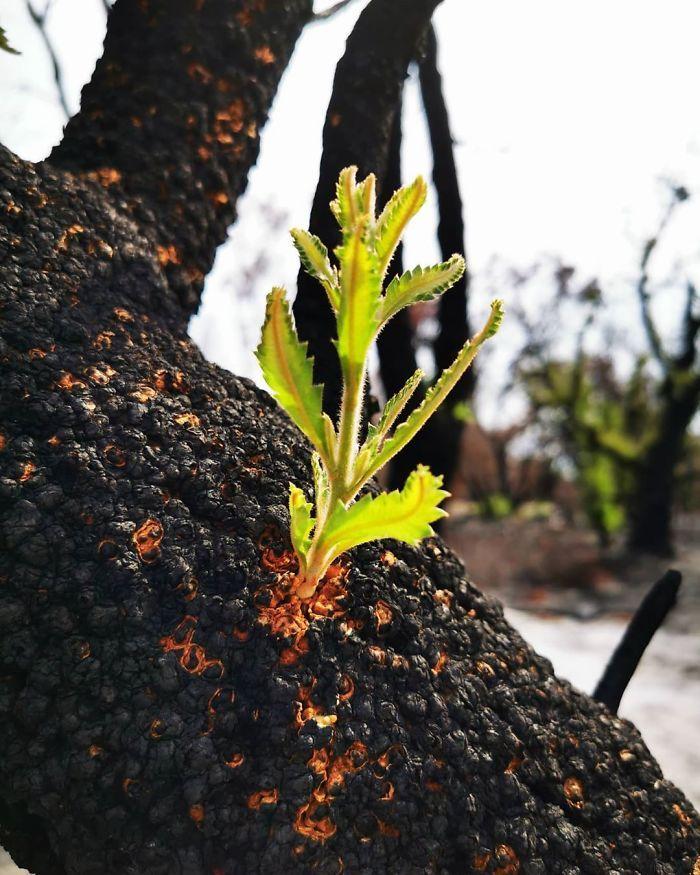 A vida está retornando à terra destruída pelos incêndios na Austrália (35 fotos) 11