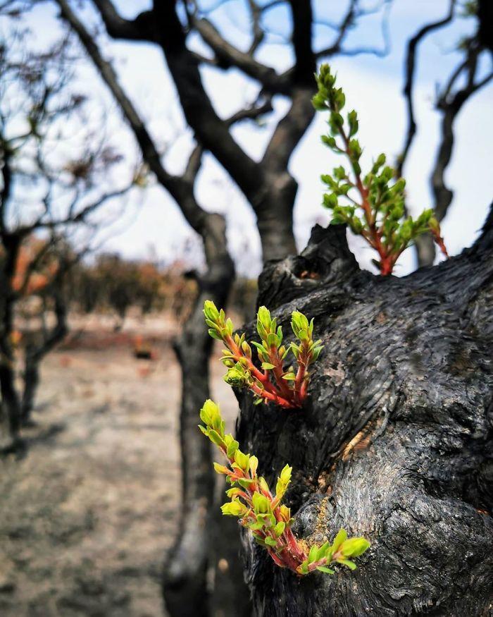 A vida está retornando à terra destruída pelos incêndios na Austrália (35 fotos) 12