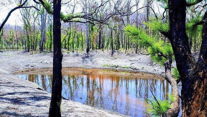 A vida está retornando à terra destruída pelos incêndios na Austrália (35 fotos) 15