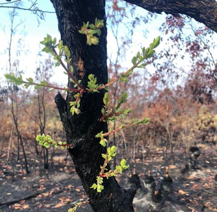 A vida está retornando à terra destruída pelos incêndios na Austrália (35 fotos) 17