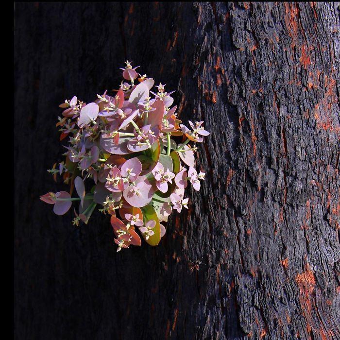 A vida está retornando à terra destruída pelos incêndios na Austrália (35 fotos) 26