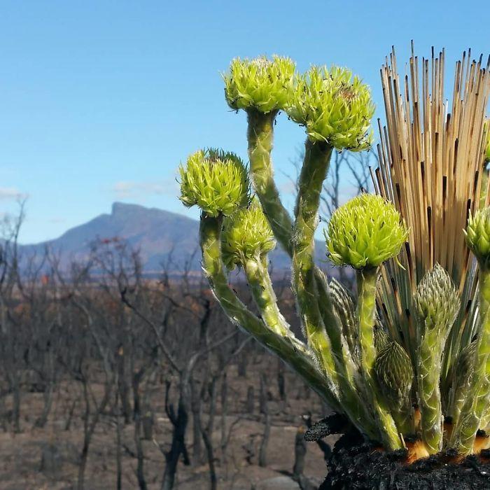 A vida está retornando à terra destruída pelos incêndios na Austrália (35 fotos) 27
