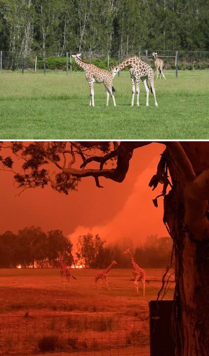 21 Antes e depois, fotos da Austrália mostram quanto dano os incêndios já causaram 11