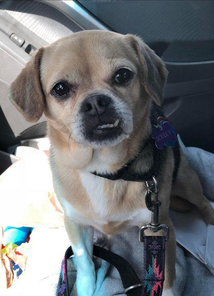 """Há uma comunidade on-line """"Toofers"""" feita para apreciar fotos de adoráveis dentes de cachorro 5"""