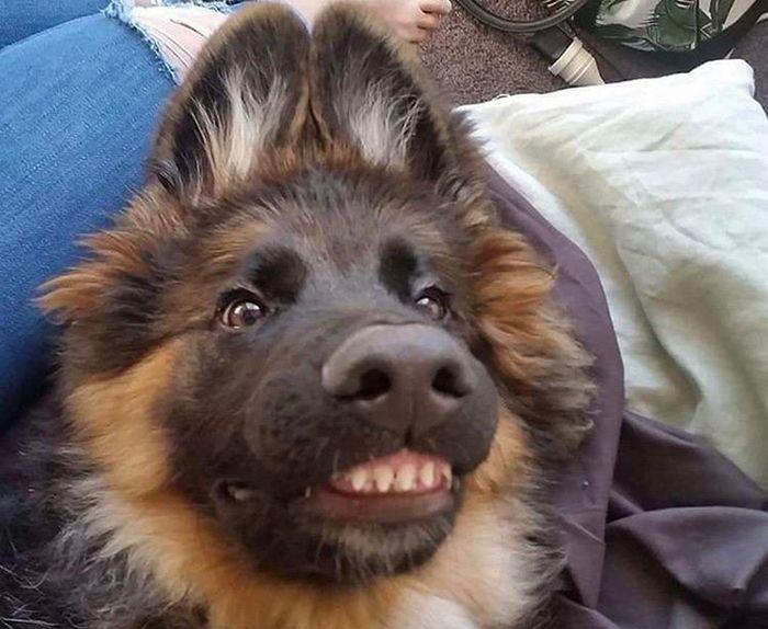 """Há uma comunidade on-line """"Toofers"""" feita para apreciar fotos de adoráveis dentes de cachorro 11"""