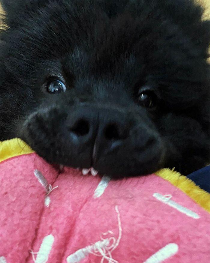"""Há uma comunidade on-line """"Toofers"""" feita para apreciar fotos de adoráveis dentes de cachorro 12"""