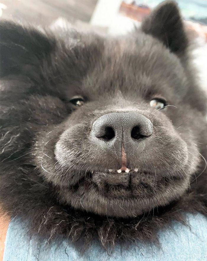 """Há uma comunidade on-line """"Toofers"""" feita para apreciar fotos de adoráveis dentes de cachorro 13"""