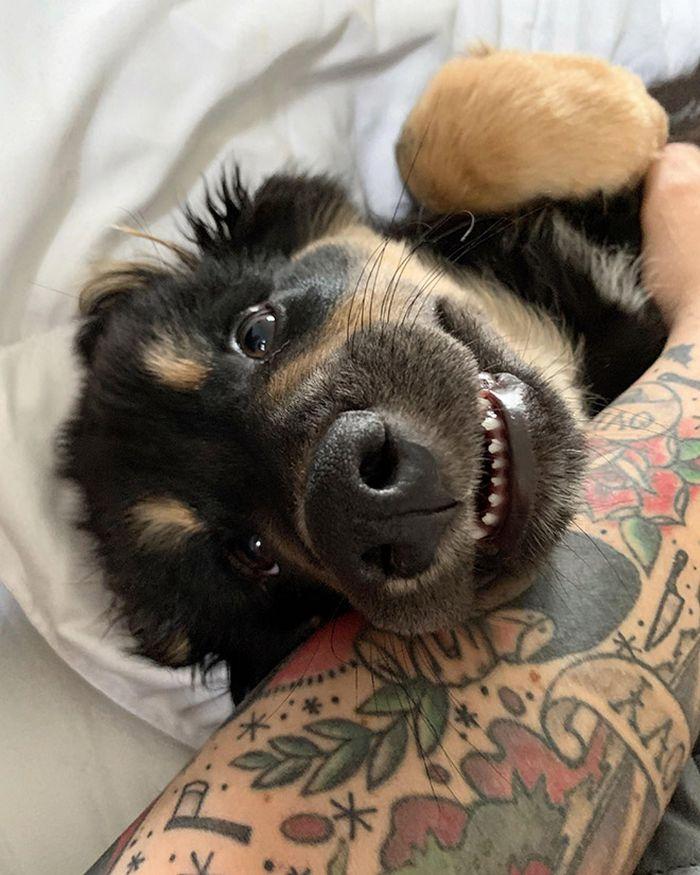 """Há uma comunidade on-line """"Toofers"""" feita para apreciar fotos de adoráveis dentes de cachorro 16"""