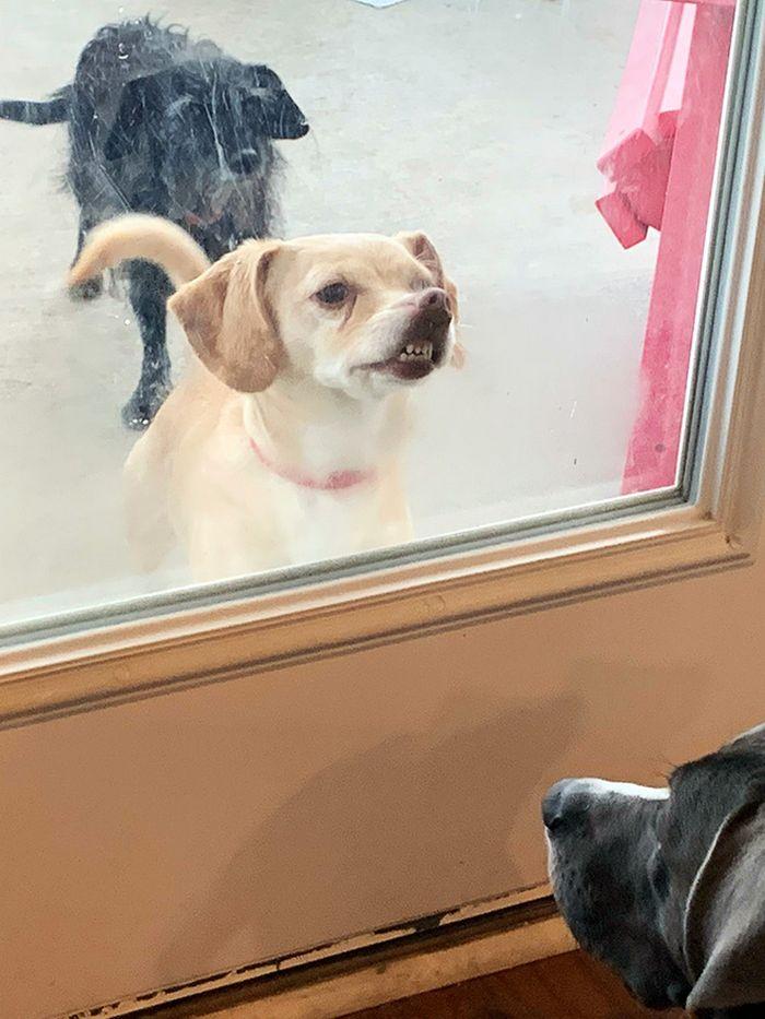 """Há uma comunidade on-line """"Toofers"""" feita para apreciar fotos de adoráveis dentes de cachorro 19"""