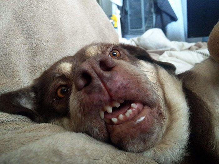 """Há uma comunidade on-line """"Toofers"""" feita para apreciar fotos de adoráveis dentes de cachorro 22"""