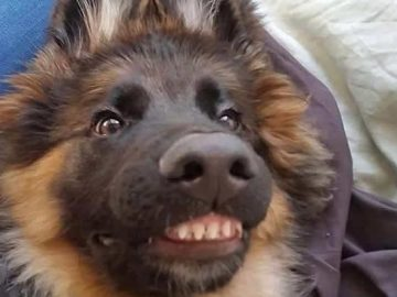 """Há uma comunidade on-line """"Toofers"""" feita para apreciar fotos de adoráveis dentes de cachorro 7"""