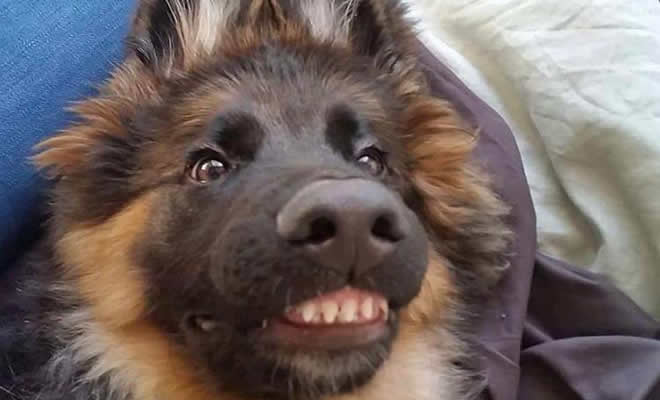 """Há uma comunidade on-line """"Toofers"""" feita para apreciar fotos de adoráveis dentes de cachorro 1"""