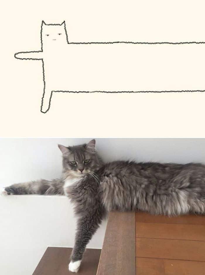 21 desenhos de gato realmente precisos 5
