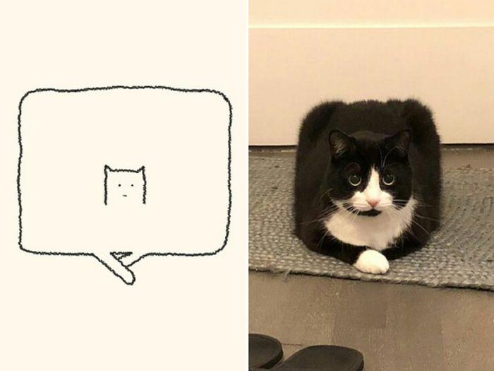 21 desenhos de gato realmente precisos 11