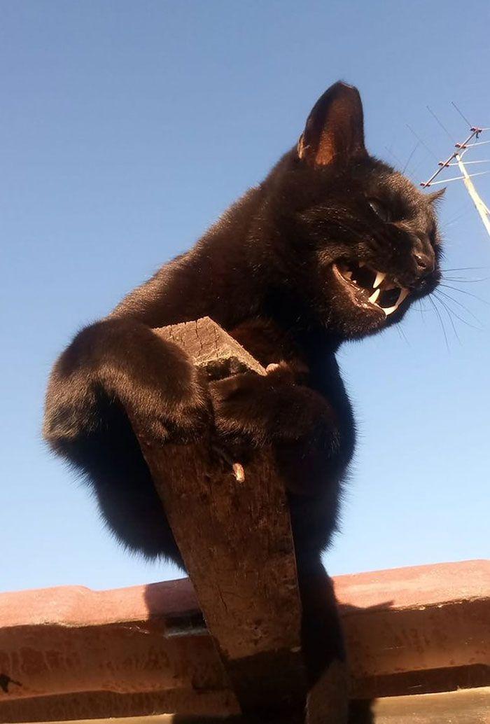 8 fatos que comprova que panteras são apenas gatos gigantes 12