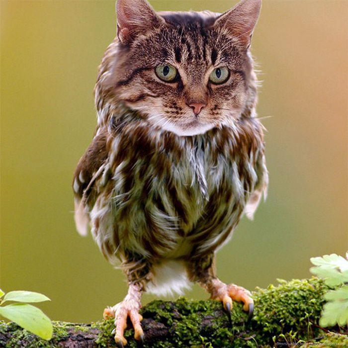 22 fusões mais incríveis de gato com coruja 4