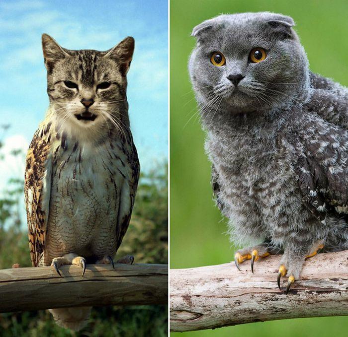 22 fusões mais incríveis de gato com coruja 16
