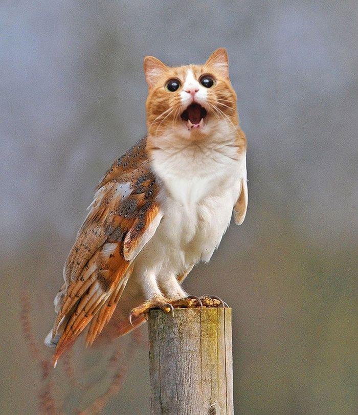 22 fusões mais incríveis de gato com coruja 17