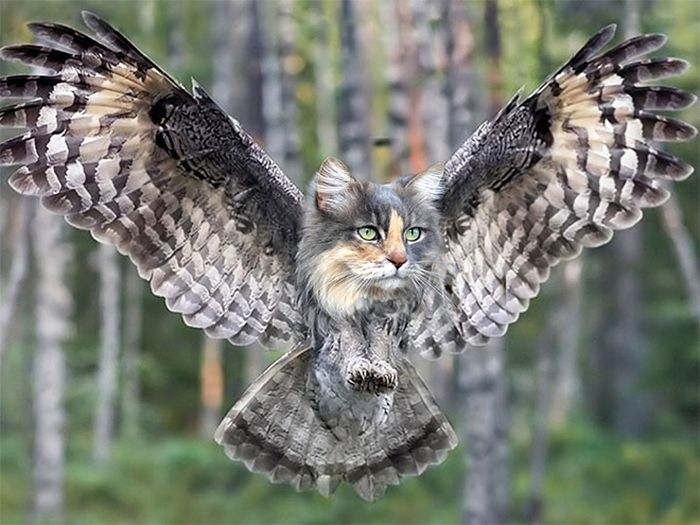22 fusões mais incríveis de gato com coruja 22