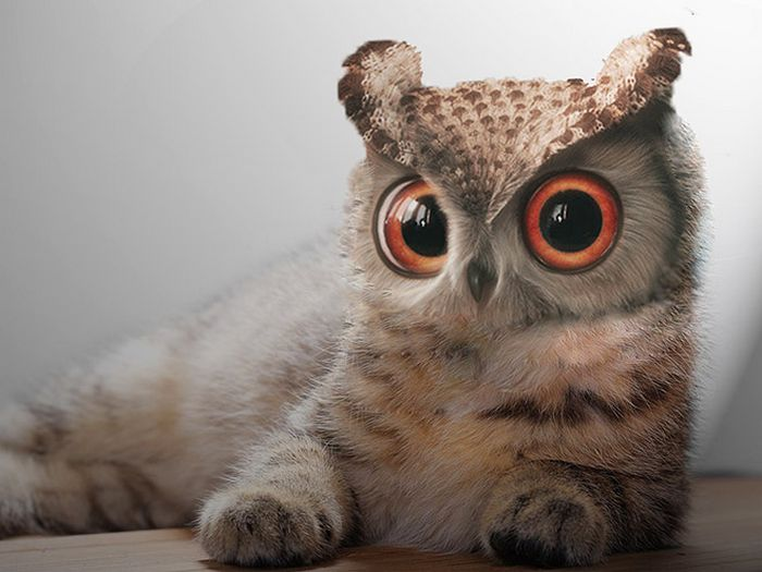 22 fusões mais incríveis de gato com coruja 23