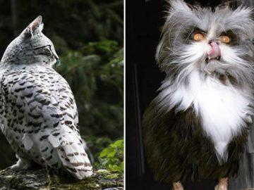22 fusões mais incríveis de gato com coruja 8
