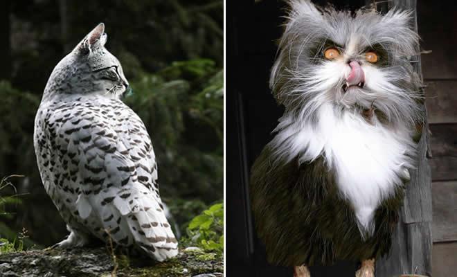 22 fusões mais incríveis de gato com coruja 1