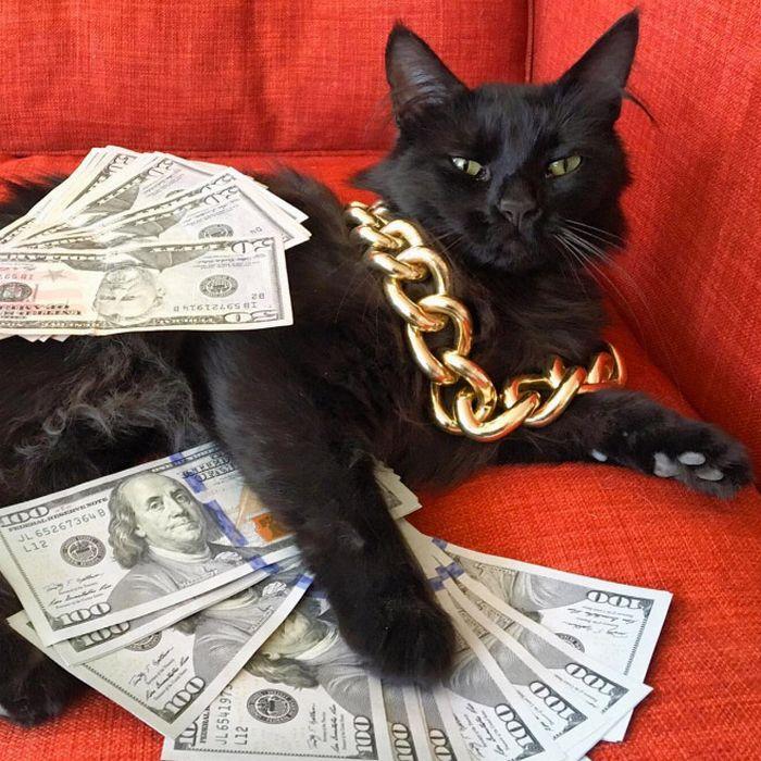 21 gatos gângsteres ricos esbanjando sua riqueza 3