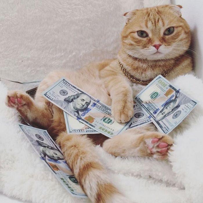 21 gatos gângsteres ricos esbanjando sua riqueza 4