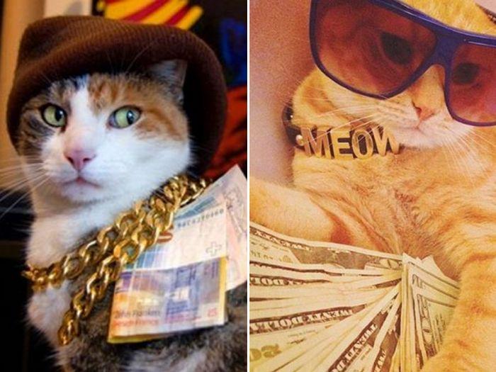 21 gatos gângsteres ricos esbanjando sua riqueza 5