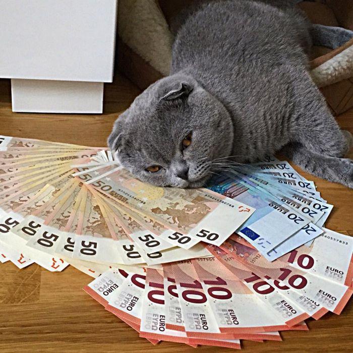 21 gatos gângsteres ricos esbanjando sua riqueza 6