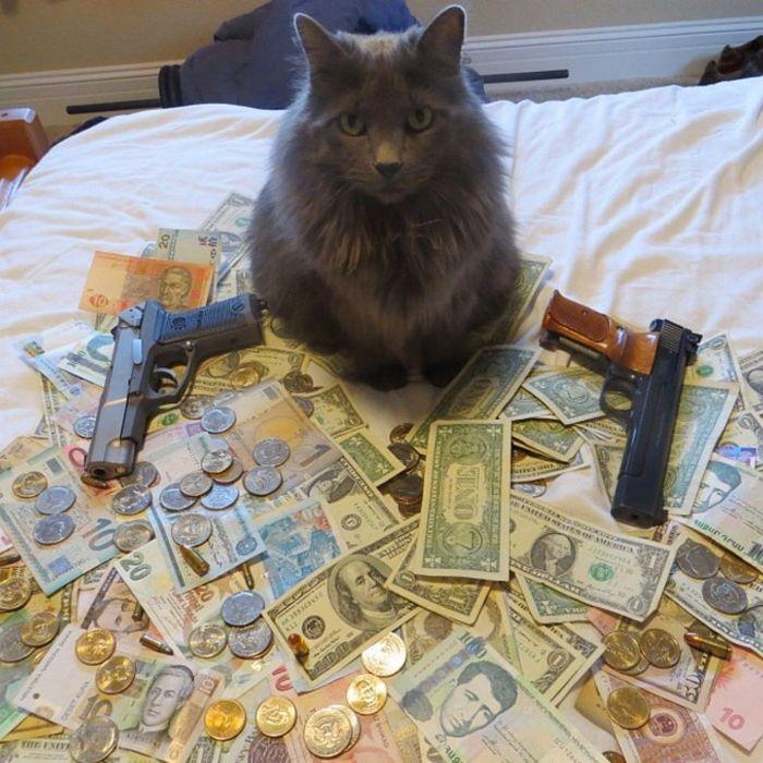 21 gatos gângsteres ricos esbanjando sua riqueza 7
