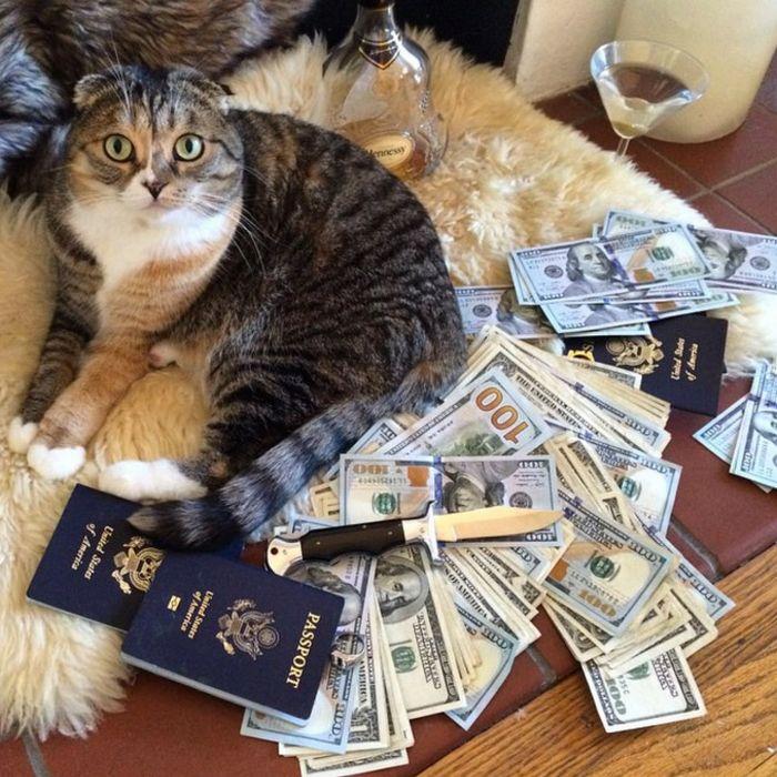 21 gatos gângsteres ricos esbanjando sua riqueza 8
