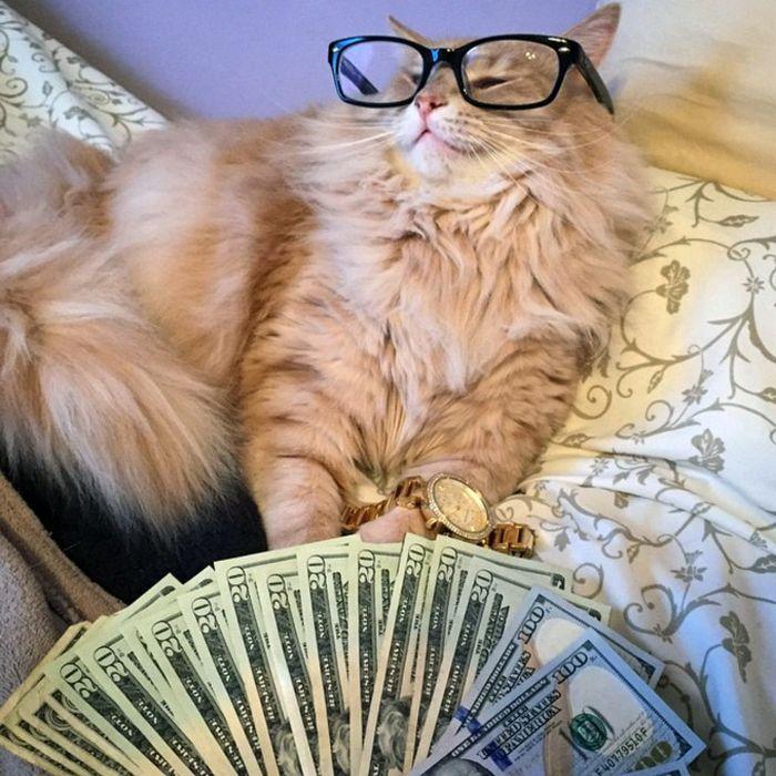 21 gatos gângsteres ricos esbanjando sua riqueza 9