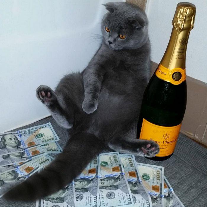 21 gatos gângsteres ricos esbanjando sua riqueza 10
