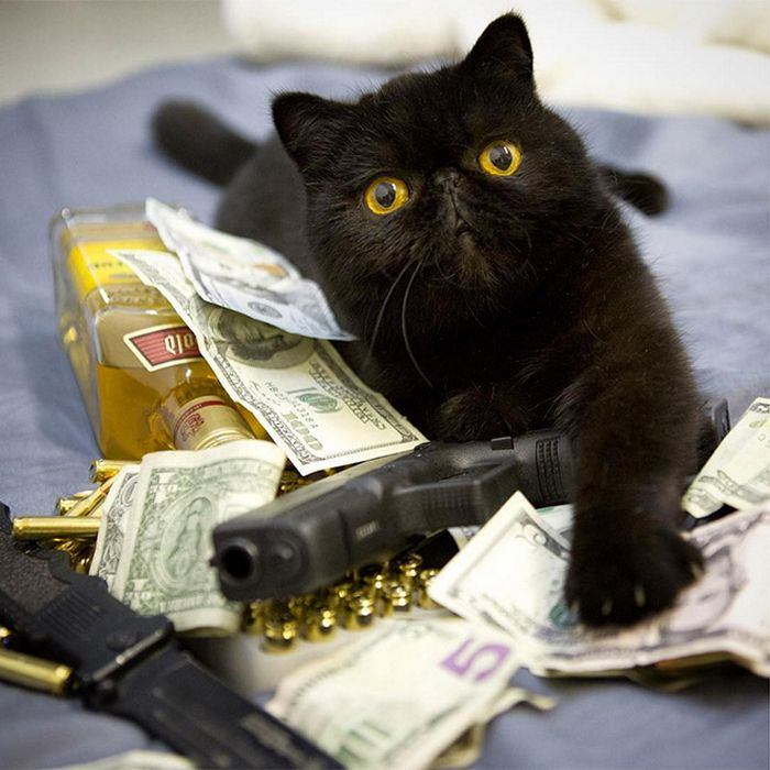 21 gatos gângsteres ricos esbanjando sua riqueza 11