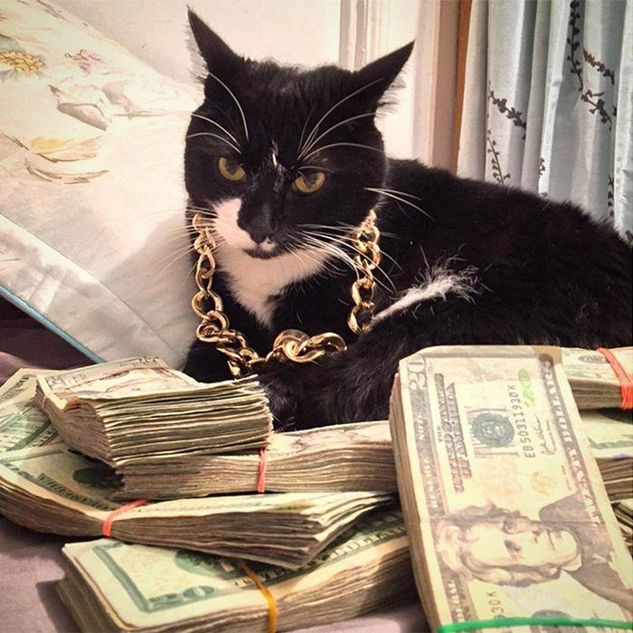 21 gatos gângsteres ricos esbanjando sua riqueza 12